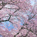 外壁塗装に適した時期は春!季節ごとのデメリットから工事の目安年数まで解説