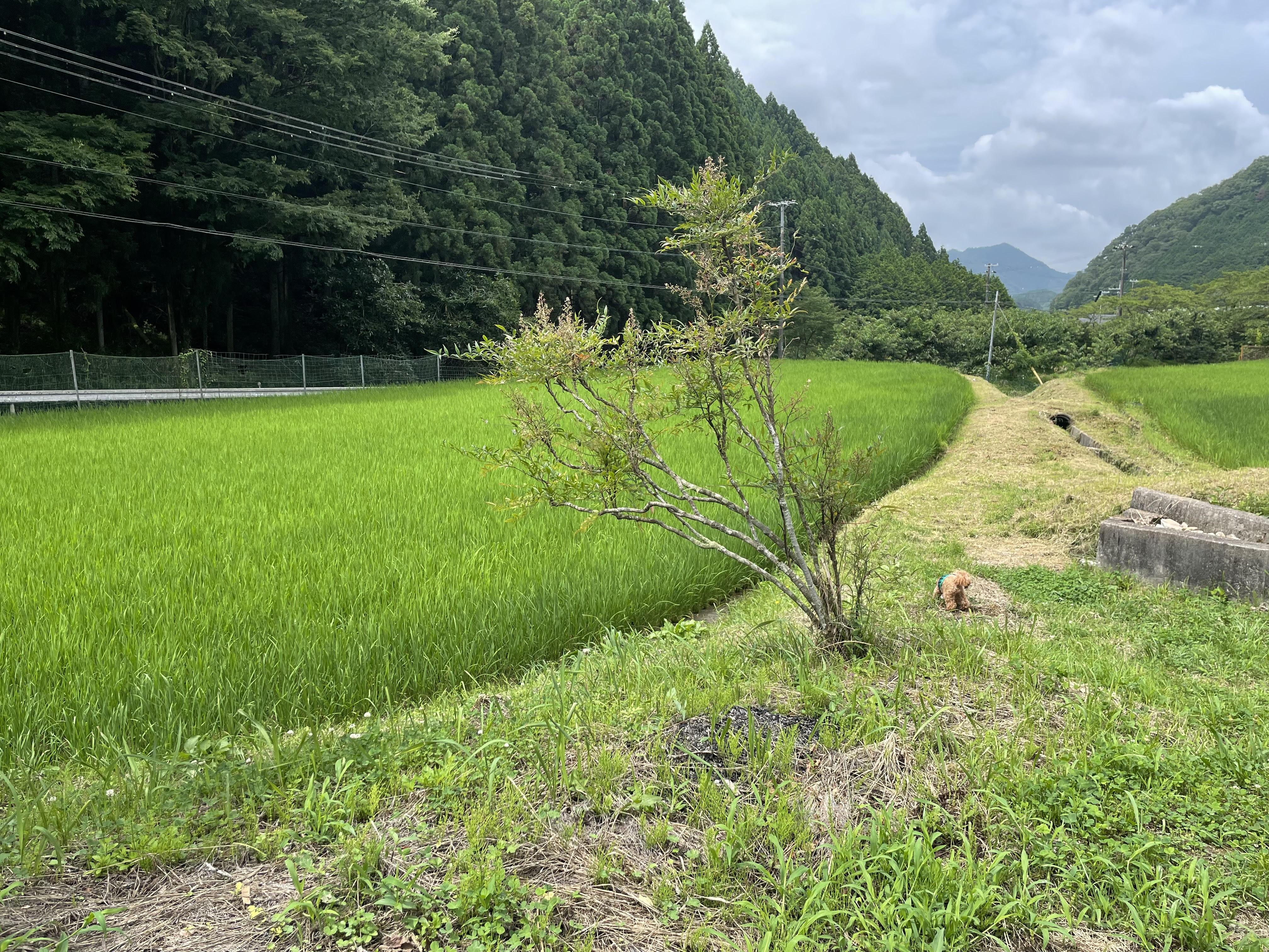 里山・田んぼ(農地)の風景を活かした宿泊施設の写真2