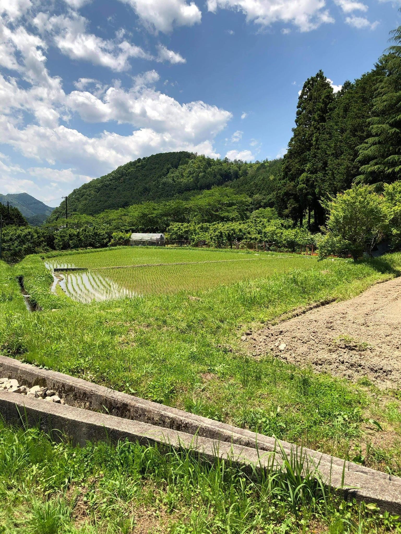 里山・田んぼ(農地)の風景を活かした宿泊施設の写真4