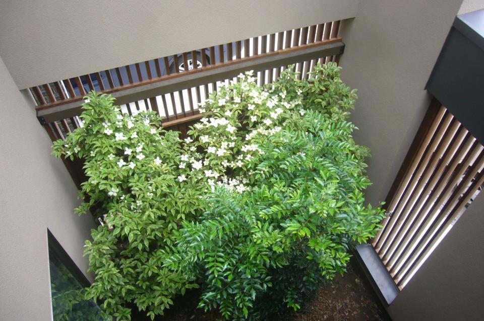 三つの陸屋根を持つコートハウスの写真18